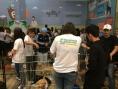 Adoção de cães e gatos tem a maior adesão durante feira