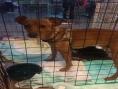 ACISBEC apoia adoção de cães e gatos